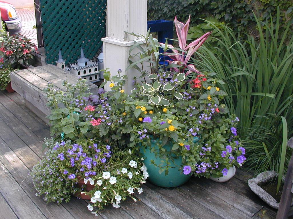 Container and Balcony Gardens The Avante Gardener